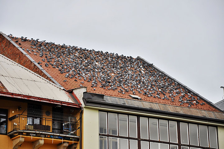 A2B Pest Control are able to install spikes to deter birds from roofs in Tilbury.