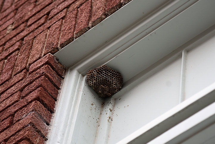 We provide a wasp nest removal service for domestic and commercial properties in Tilbury.